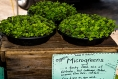Food Highlight: Microgreens