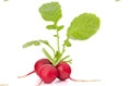 Food Highlight: Radishes