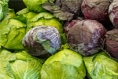 Is Cabbage the New Kale?
